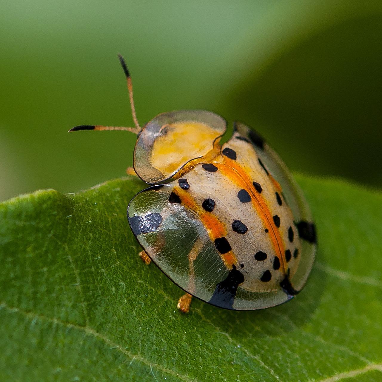 картинки про разных насекомых стоит отметить