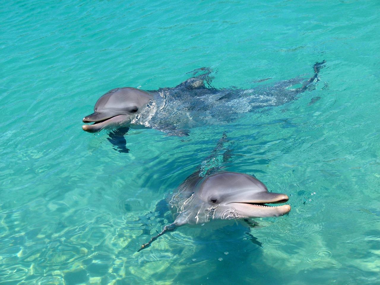 все фото дельфина решаются