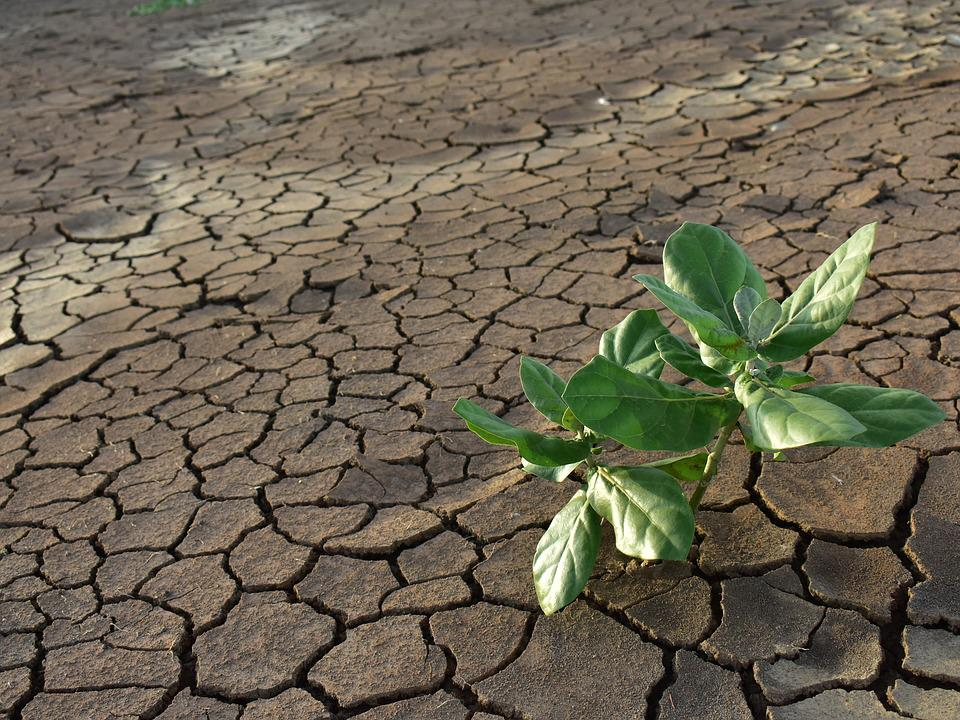 Free photo drought dry mud green plant free image on pixabay drought dry mud green plant cracked dry land sciox Images