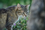 cat, feline, pet