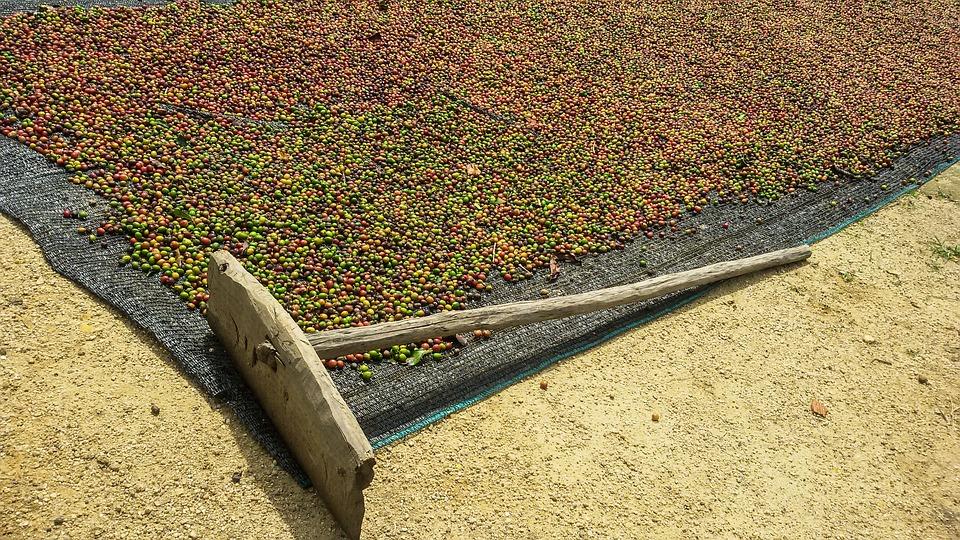 Coffee, Coffee Fruit, Fruits, Cafe, Fruit, Organic, Dry