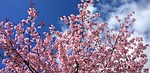 spring, flowering