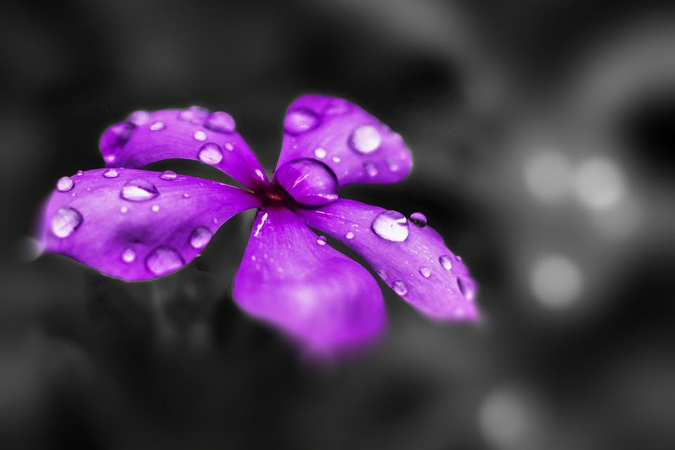 Flower Purple Flowers Nature