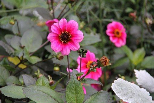 flowers-2999438__340.jpg