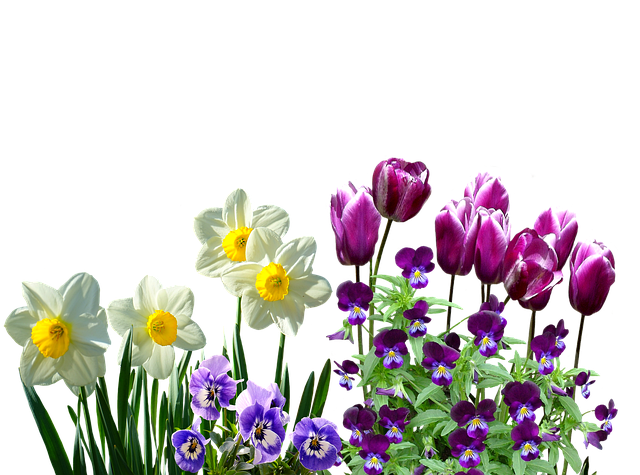 Todd Clipart 20 Fee Cliparts Download Imagenes: Spring Daffodils Osterglocken · Free Photo On Pixabay