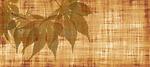 parchment, paper, leaves