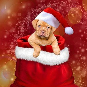 Noël, Cadeaux, Chiens, Noël Chien