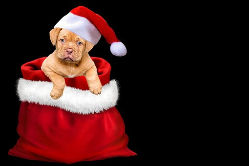 Julen, Julefrokost, Gaver, Hund