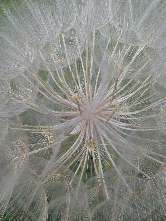 Fiori Selvatici Bianchi.Fiore Natura Fiori Selvatici Foto Gratis Su Pixabay