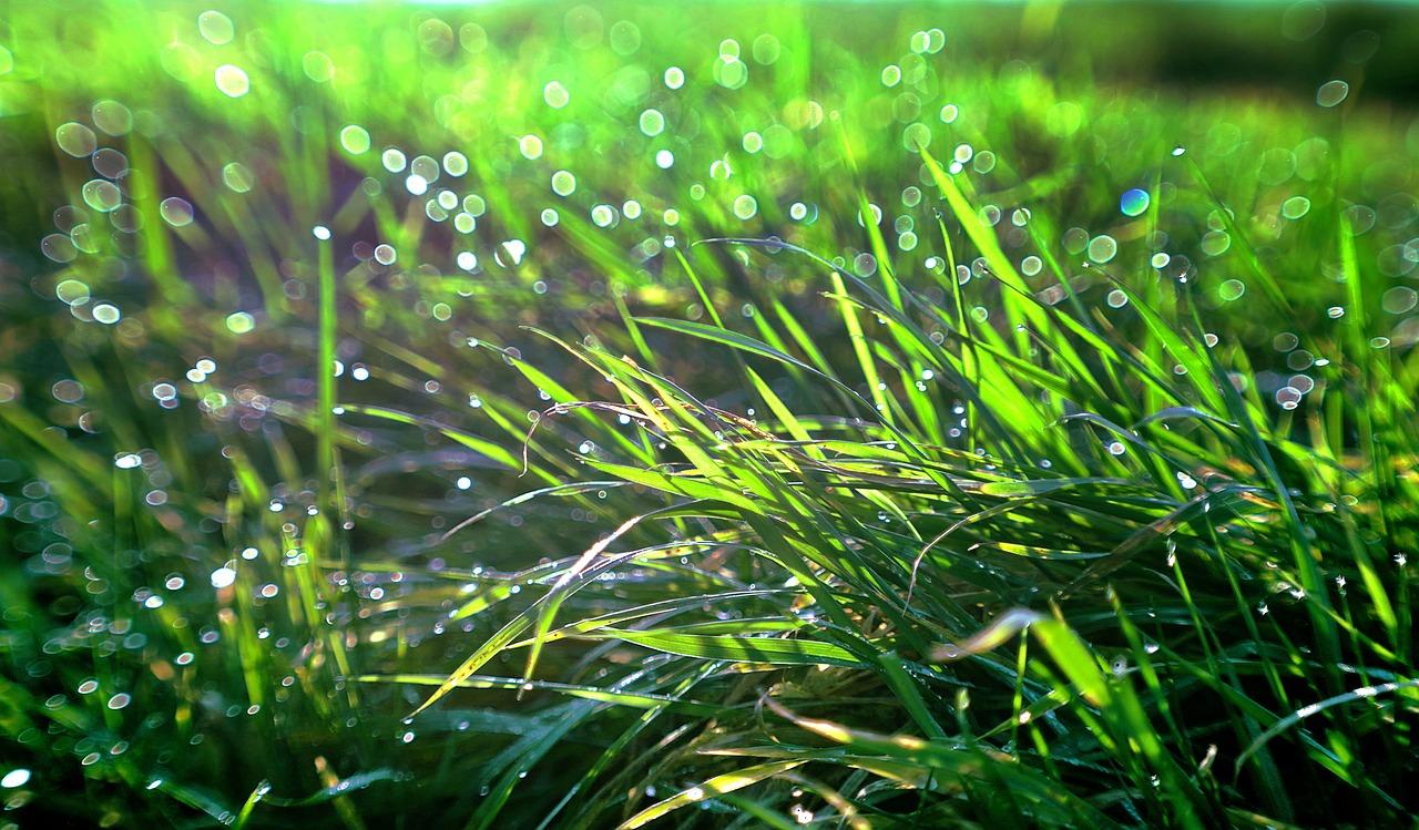 свд анимация роса на траве интернете
