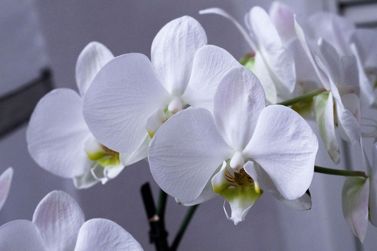 Картинка с днем рождения орхидеи
