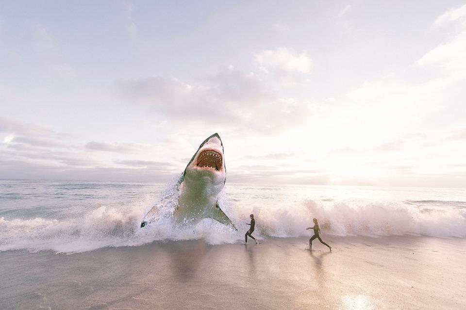 Risultati immagini per squali bianchi