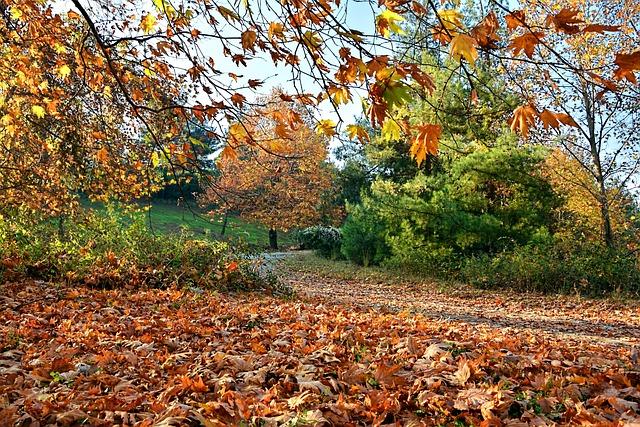 Autumn Season Nature · Free Photo On Pixabay