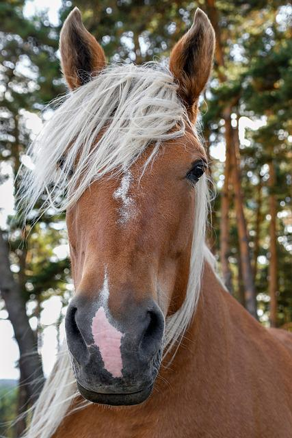 Free Photo  A Workhorse  Portrait  Head  Horse