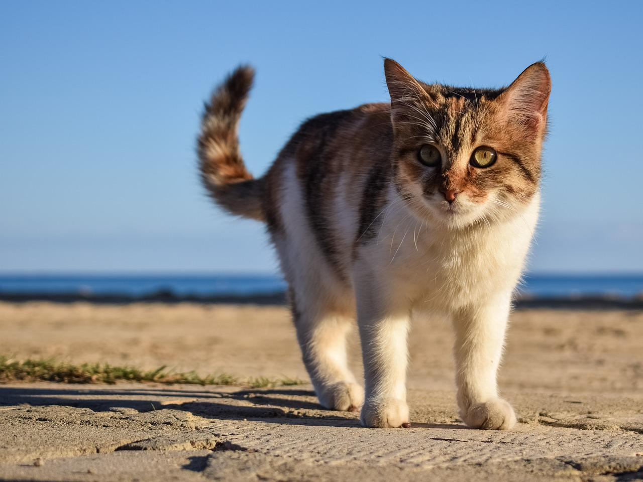 Cats Hate Beaches