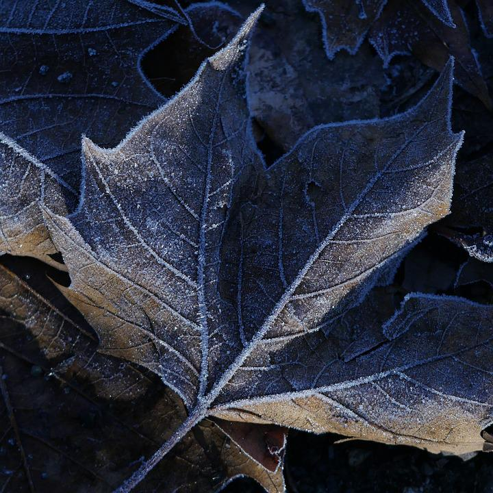 Image result for pixabay leaves with frost