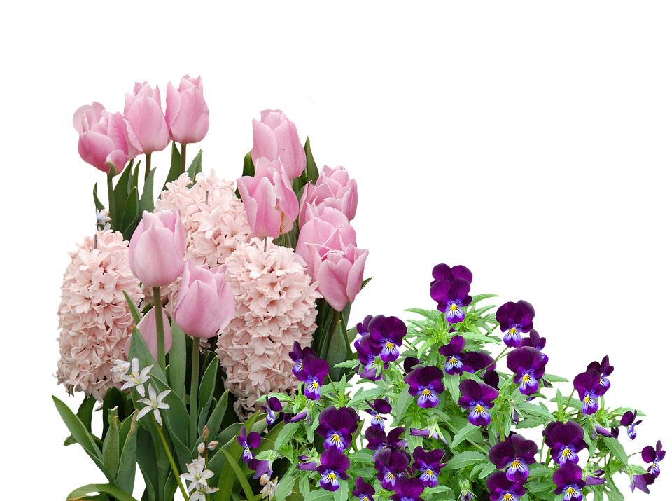 Spring Tulips Easter Free Photo On Pixabay