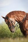 horse, rusty, mane