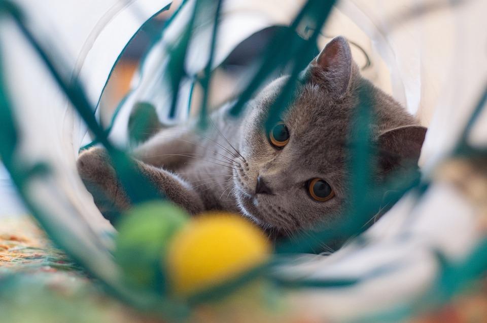 猫用おすすめ暑さ対策グッズ 定番/手作り/100均・子猫用