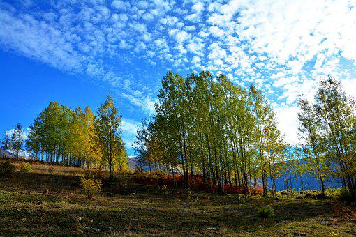 autumn-3010172__340.jpg