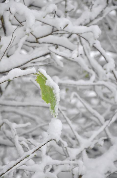 Schnee Blatt Baum · Kostenloses Foto auf Pixabay