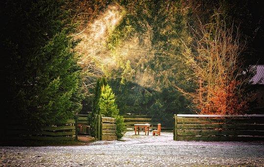 Χειμώνα, Δάσος, ΔέντÏÎ¿, Χιόνι, Πολωνία