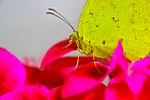 butterfly, affix