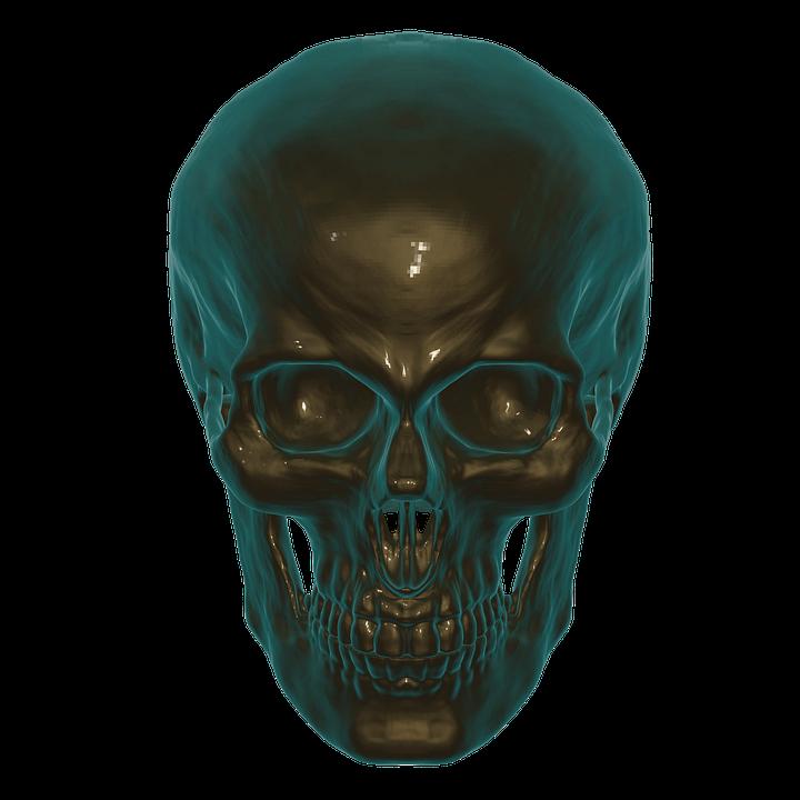Cráneo Anatomía Calabera · Imagen gratis en Pixabay