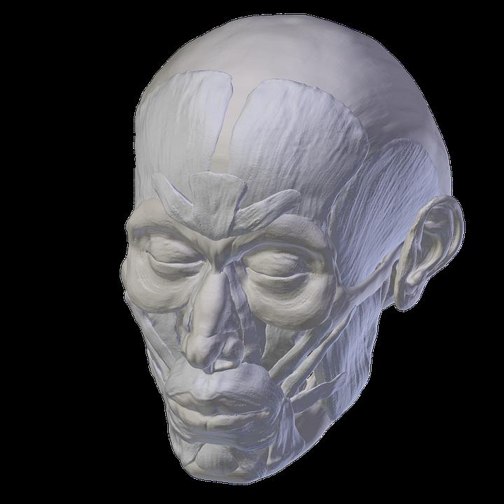 Skull Anatomy And Crossbones · Free image on Pixabay