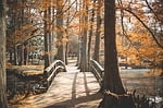 most, park, poza