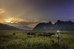 sunset, field, twilight