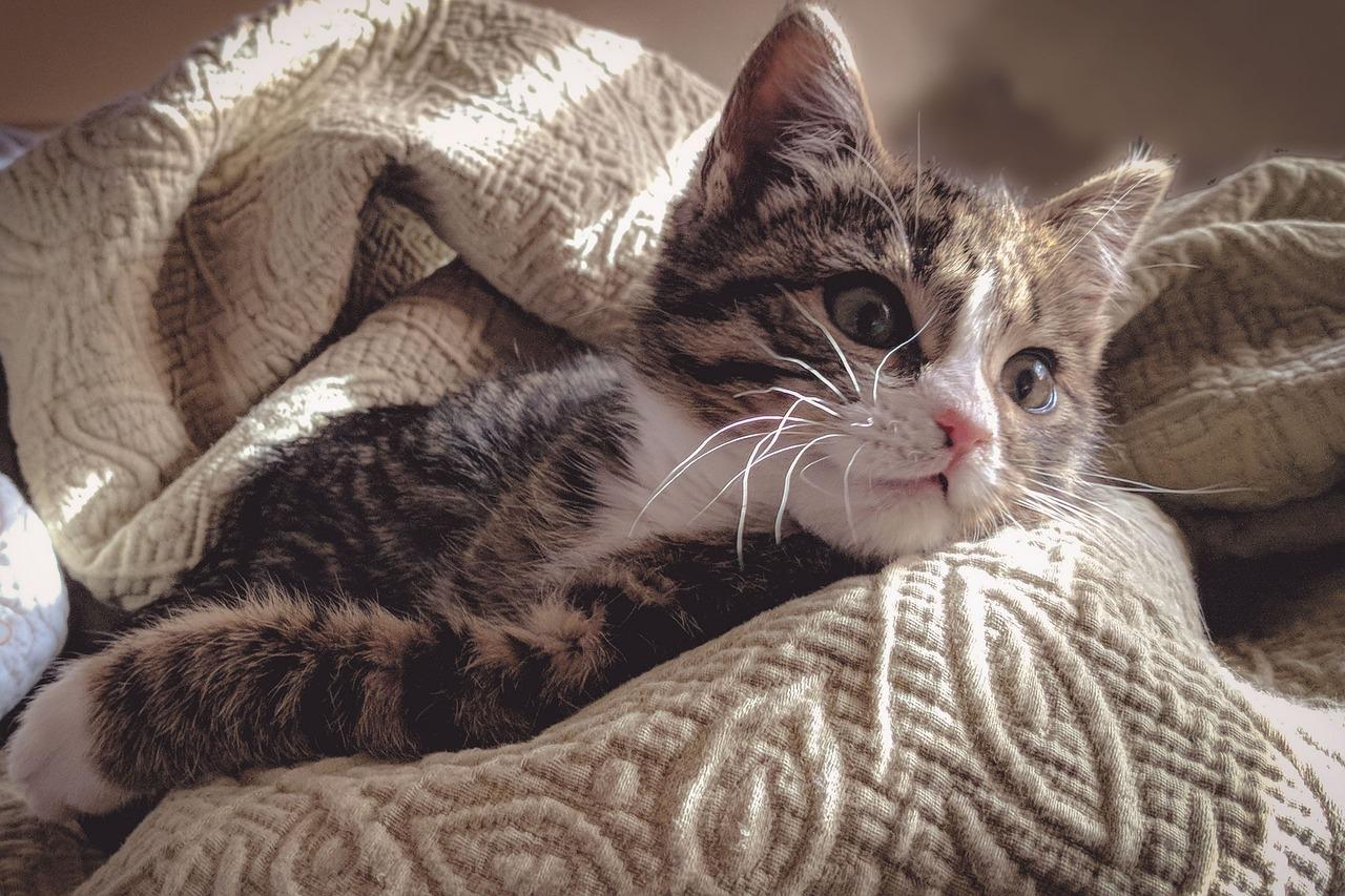 самый фото котенка под пледом зимы