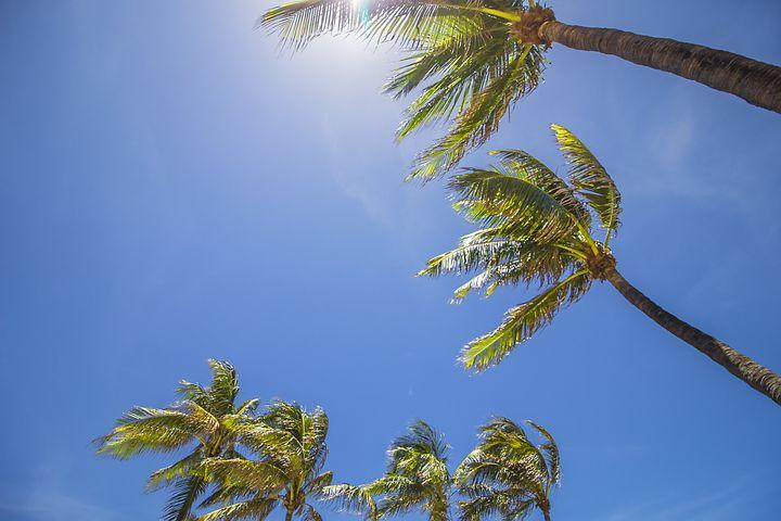 картинка пальмы и солнца милей новый москвич