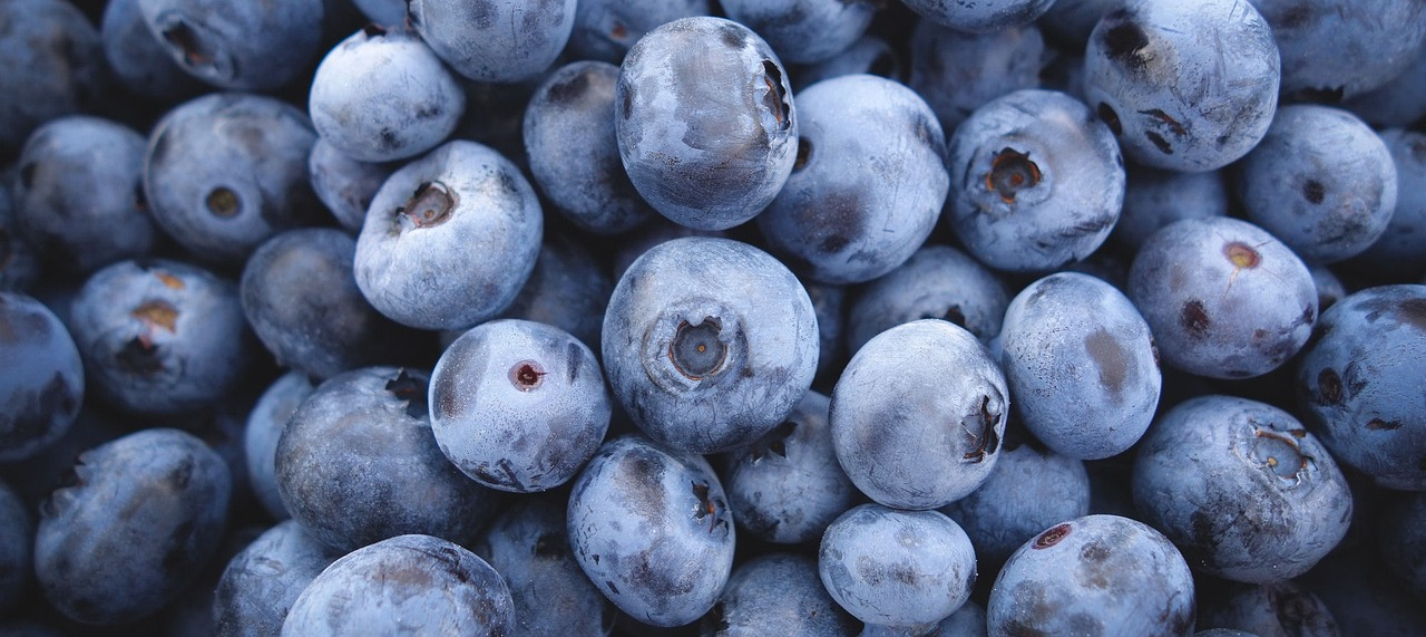 Blueberries Blue Berry - Free photo on Pixabay