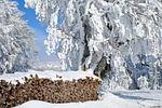 wood, firewood