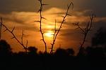 sunset, silhouette, sun
