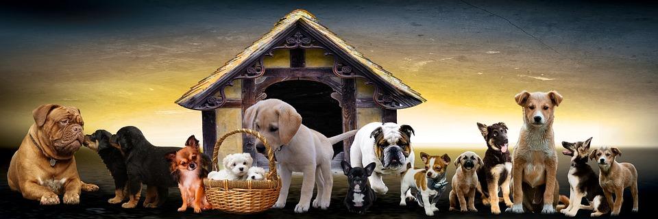 Home Dog Training Naef GmbH