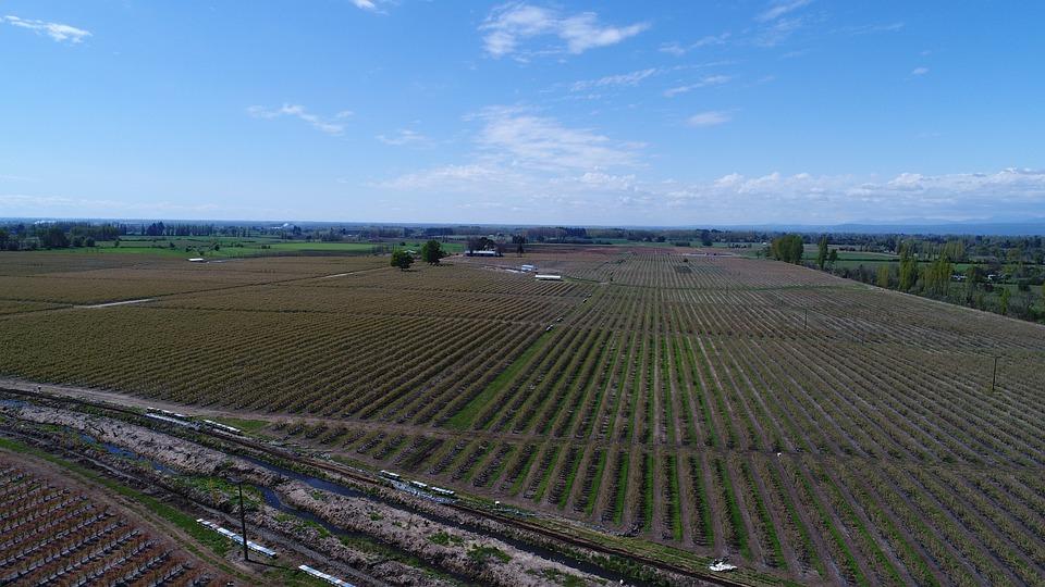 Agricultura, Drone, Fumigación, Tecnología, Cultivo