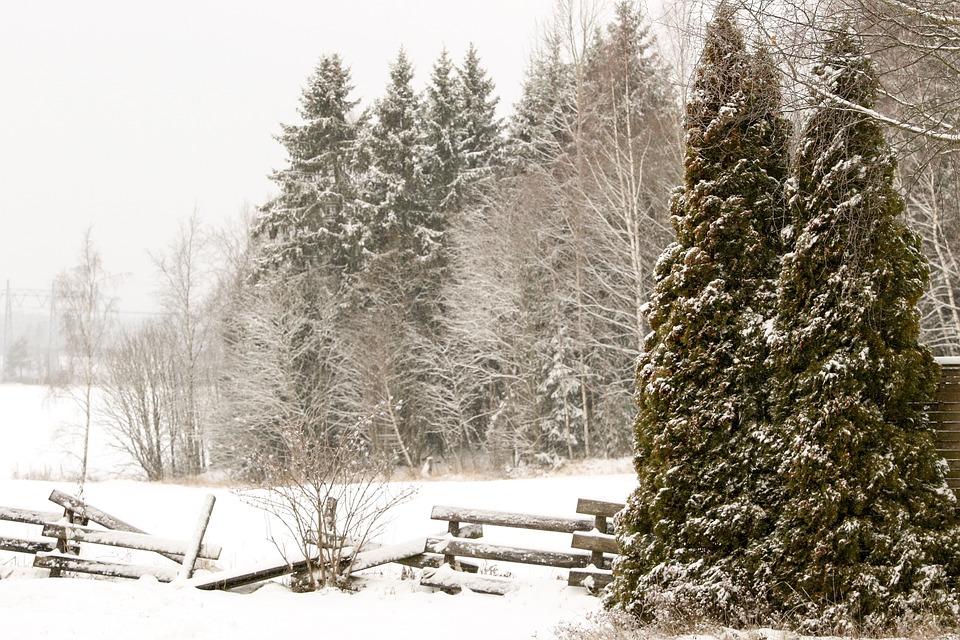 """Résultat de recherche d'images pour """"forêt norvège hiver"""""""