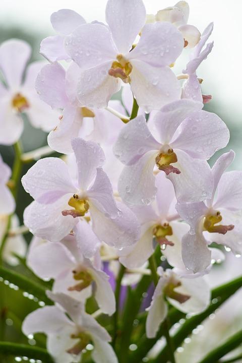 Bunga Anggrek Daun Foto Gratis Di Pixabay