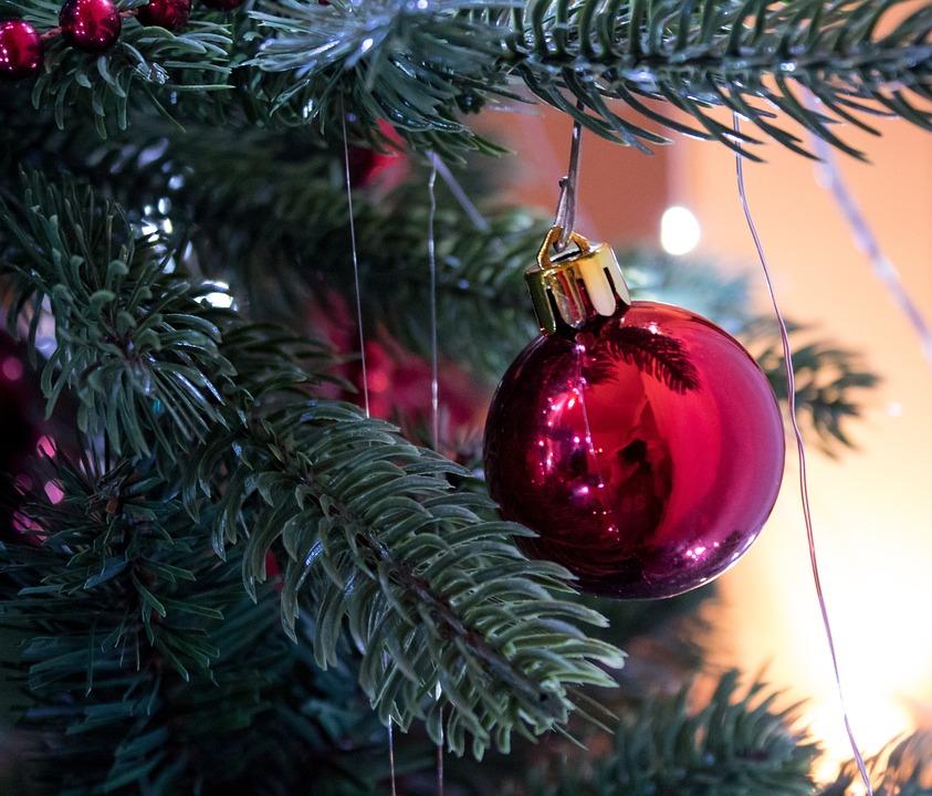 Native, Vinter, Pinus, Fest, Kugle, Gran, Træ, Juletræ
