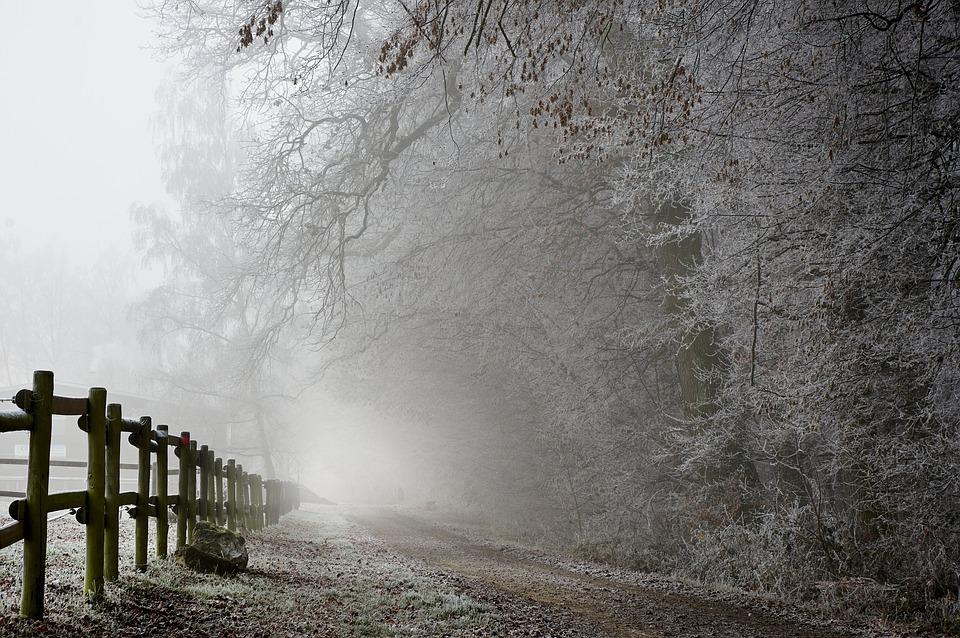 Resultado de imagem para natureza frio