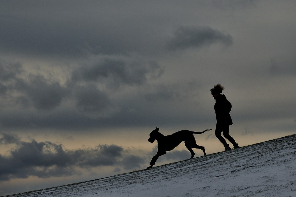 Silhouette Man And Dog Great · Free photo on Pixabay