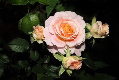 400+ Free Night Flower & Night Images - Pixabay