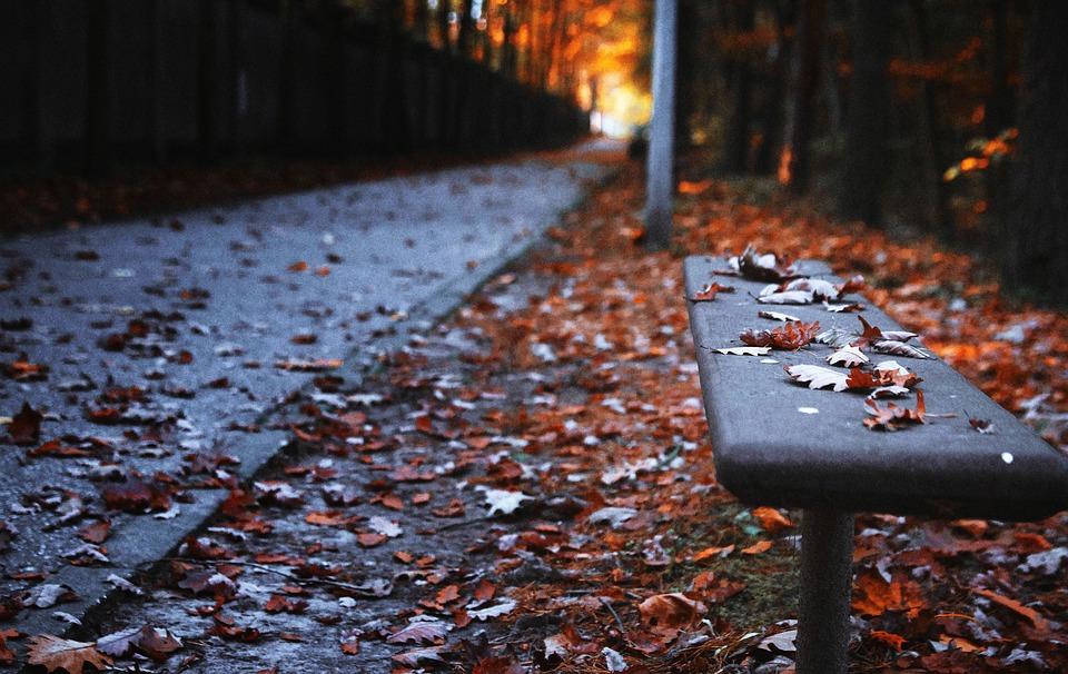 Sitzbank, Herbst, Der Pfad, Park, Blatt, Baum, Garten