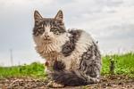 cat, animal, homeless