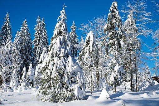 Verschneite Weihnachtsbilder.2 000 Kostenlose Tannen Und Tanne Bilder Pixabay