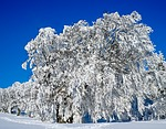 wintry, trees, book