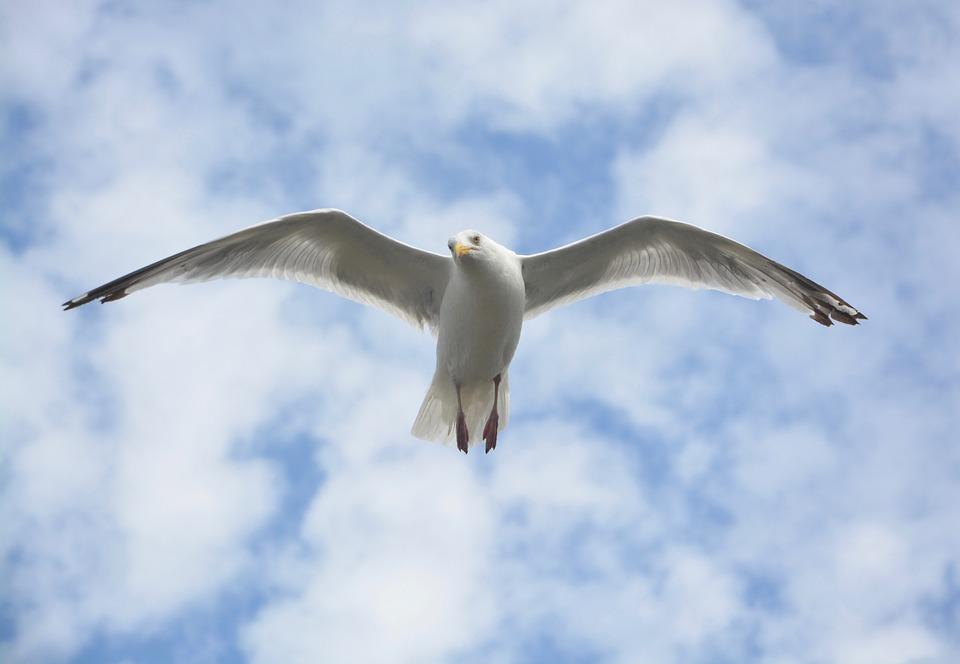 Madarak repülése