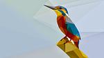 bird, halcyon, kingfisher